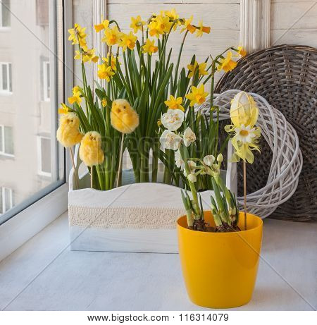Daffodils In The Balcony Boxes