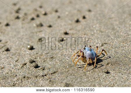 Beach Life, Australia