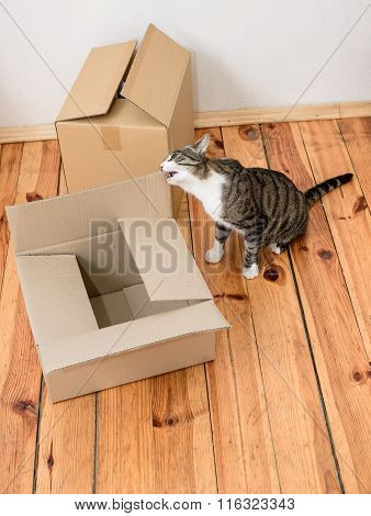 Moving Day - Cat And Cardboard Boxes