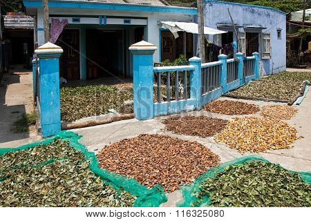 Different Asian herbs drying in the sun