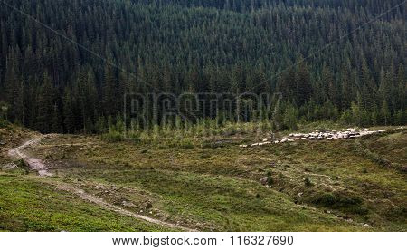 Landscape In The Ukrainian Carpathians