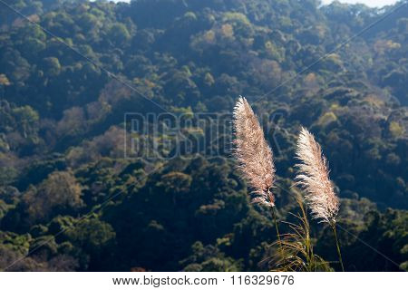 Thicket Flower And Mountain Background
