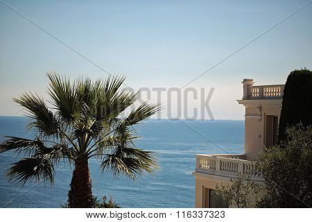 Beautiful Seascape With Palm