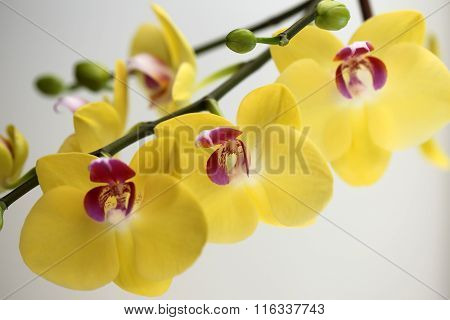 Beautiful Bright Yellow Orchid