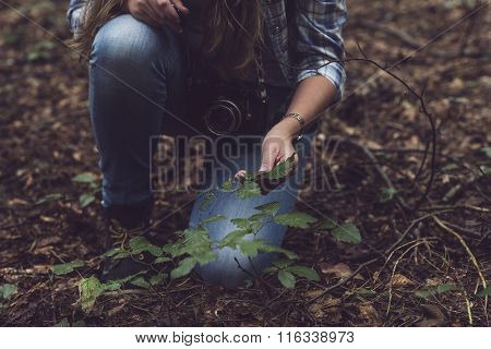 Hand Of Woman Touching Leaves Of Shrub In Forest.