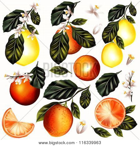 Vector Set Of Realistic Lemon And Oranges With Flowers For Design