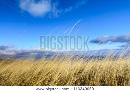 Dry Grass With Blue Sky Behind. Horizontal Perspective Of Dry Grass Yellow Background With Blue Sky