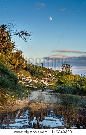 Herd Of Sheep On Beautiful Mountain Meadow. Background With Sheep, Autumnal Trees, Green Grass, Blue