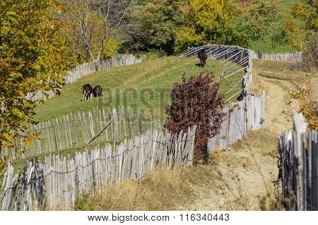 Autumn Mountain Landscape With Fence And Animals. Beautiful Sunny Autumn Mountain View With Rustic F