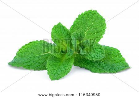 Sprig of green mint