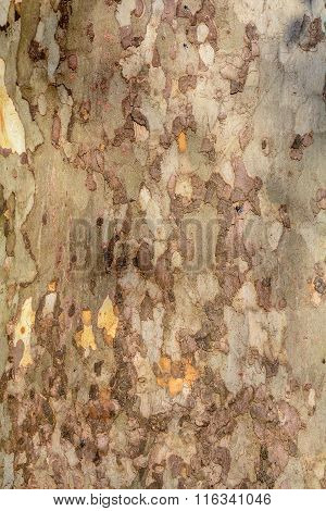 Wooden Interesting Texture - A Bark Of An Old Tree. Colored Vertical Wooden Texture Bark Autumnal Ol