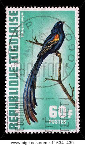 TOGO - CIRCA 1972: a stamp printed in Togo shows Diatropura progne, Exotic birds, circa 1972.
