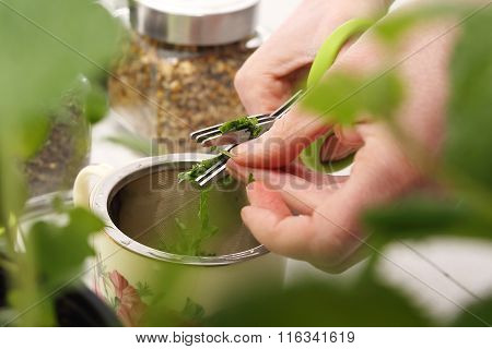 Herbs in the kitchen
