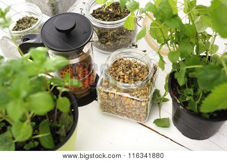 Herbs, healthy natural medicine.