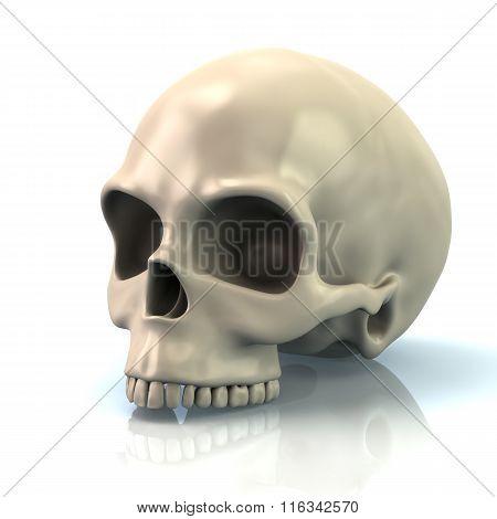 Illustration Of Human Skull