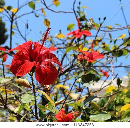 the red flower against the blue sky, with green leaves and brown branches