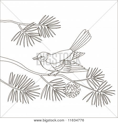 Titmouse on a pine branch, contours