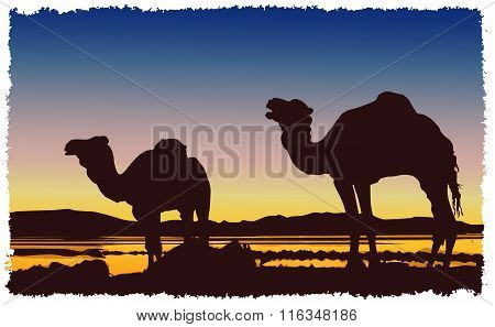Caravan Camels Desert