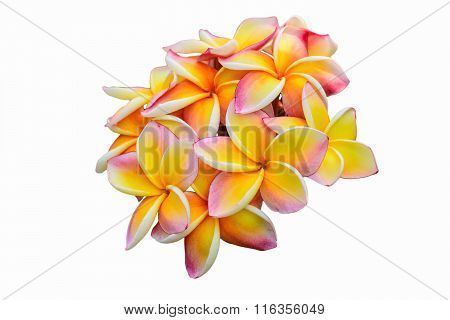 Frangipani flowers on white background. clipping path