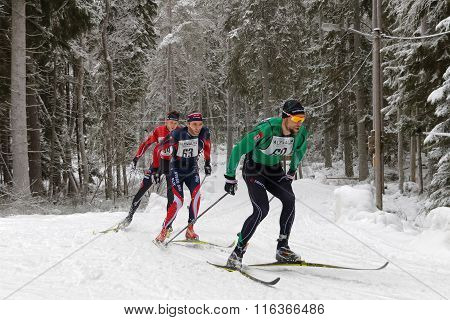 Fighting Group Of Cross Country Skiing Men In The Beautiful Spruce Forest