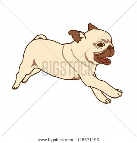 Pug puppy. Vector illustration