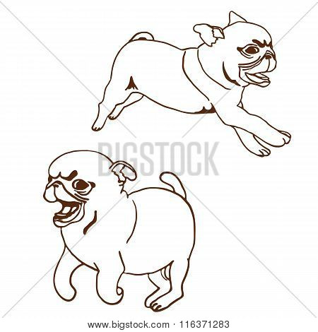 Set of two pug puppies. Vector illustration