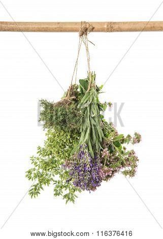 Fresh Herbs. Spices Food Ingredients Thyme, Oregano, Marjoram