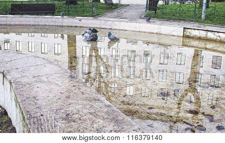 Pigeon Inside A Fountain
