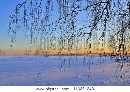 Winter Sunset Landscape With Birch Branches.