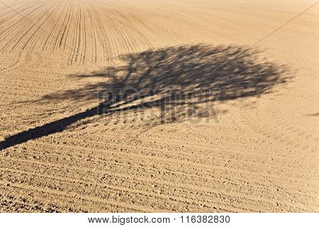 Shadow Of A Tree In The Field