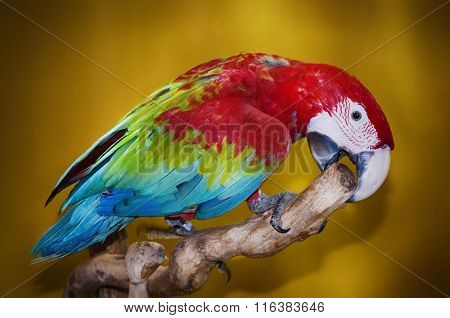 Photo Of Bright Parrot
