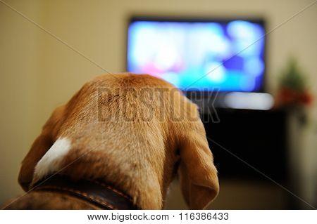 Dog Watching Tv