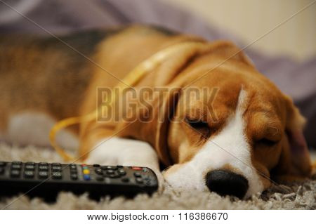 Dog Sleep With Remote Control