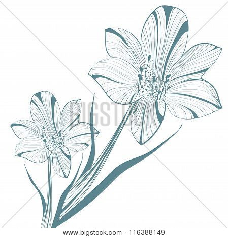 Lily Flower Over White