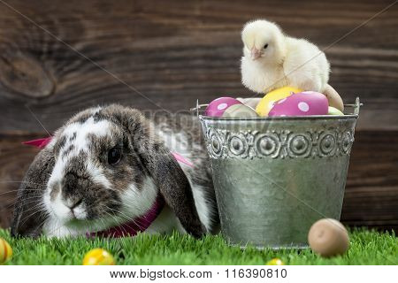 Easter Chicken, Eggs And Decorations