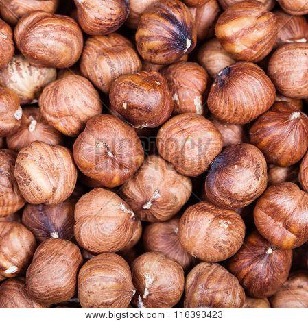 Many Dried Uncooked Hazelnuts