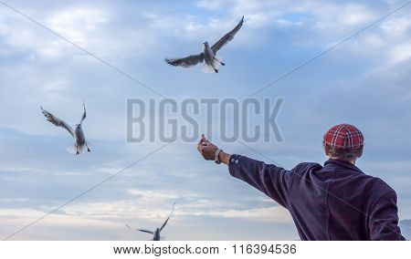 Man Feeds Gulls