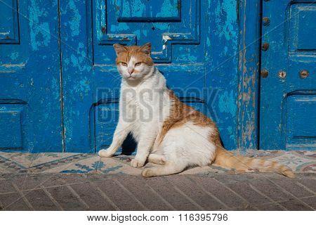 Cat And A Blue Gate
