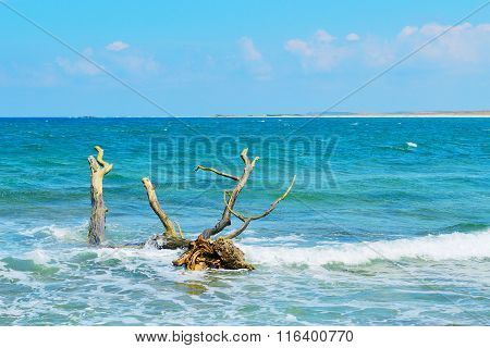Driftwood In Is Arutas