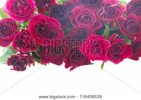 Border of red and pink roses
