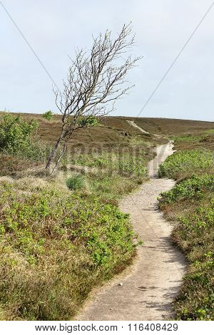 Path In The Heath And Windswept Tree