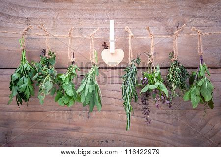 Assorted hanging herbs ffor seasoning concept on rustic old wooden background.