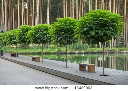Green trees' perspective