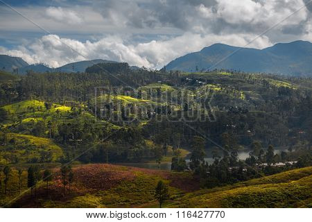 Mountains and tea plantations of the country of Sri Lanka