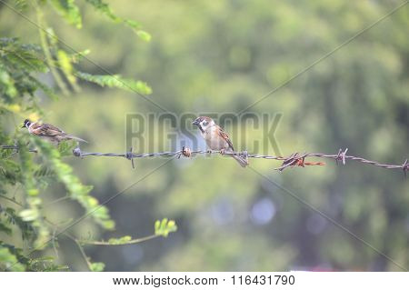 Bird Sparrow In Nature Place