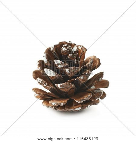 Single decorational pine cone isolated