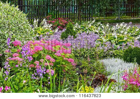 A flower bed with perennial shrubs and flowers near her house
