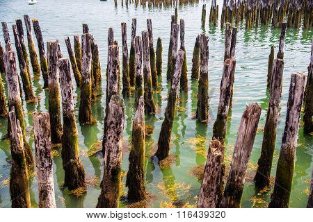 Harbor Pilings
