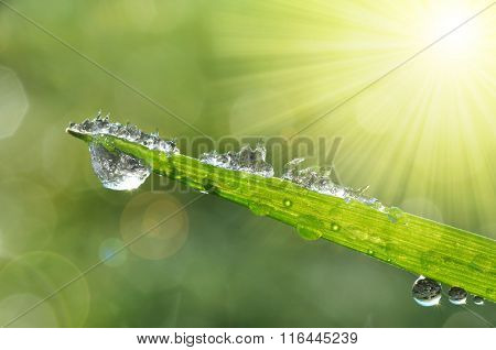 Frozen drops of dew on the green grass. Nature background.