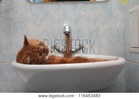 portrait of a cat washing in the sink